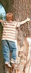 boy climbing a tree; A Case Study: Children and Falls