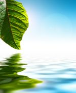 UW Health integrative medicine programs: A picture of a leaf and water