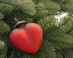 Heart ornament in pine tree bough