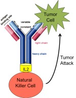 Illustration of Immunotherapy