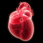 Your heart pumps approximately 2,000 gallons of blood through your body each day.