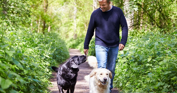 Man walking in woods with two dogs; UW Health Fitness Center staff explain why exercise is an important way to manage stress