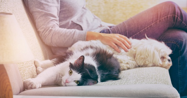 UW Health psychologist Shilagh Mirgain explains the health benefits of owning a pet.