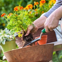 UW Health Sports Medicine Exercise Specialists offer tips for staying healthy when gardening.