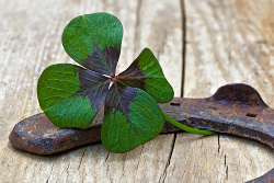 Will a four-leaf clover and horseshoes really help your performance?