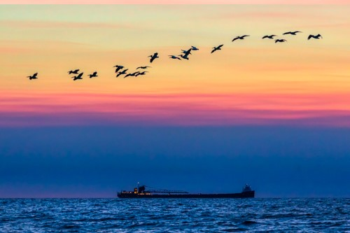 Photo Midwest Michael R Anderson-Ore Boat and Pelicans