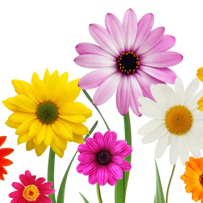 Pre-Orders Due April 27 for Friends of UW Health Spring Flower Sale